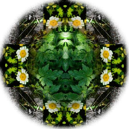 mirrorplants-logo