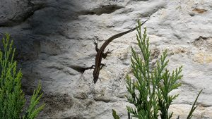 lizard on a white wall